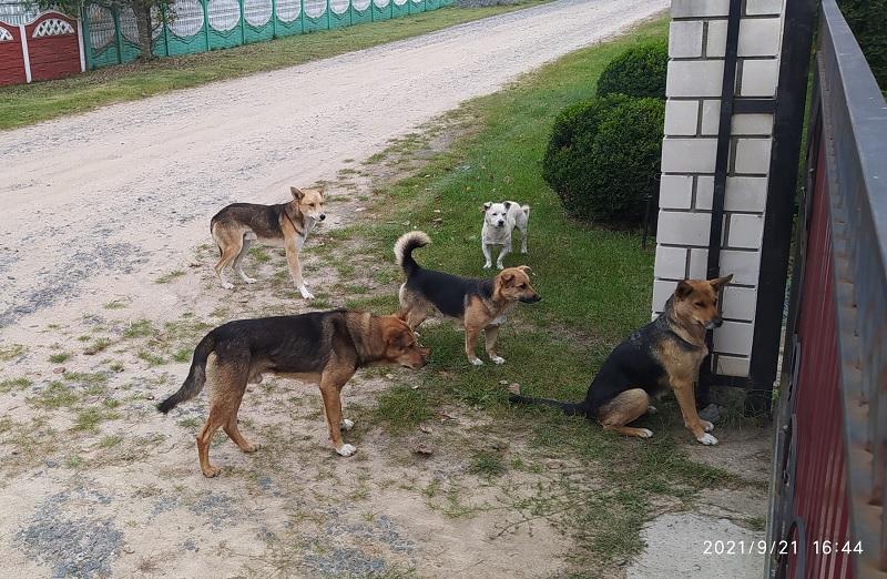 собаки Телеханы